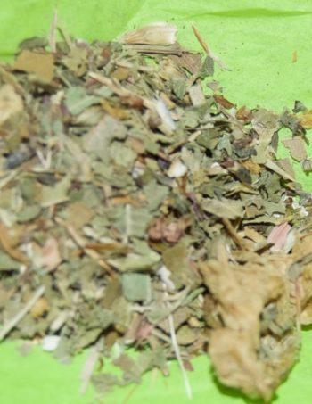 Echinacea Essence
